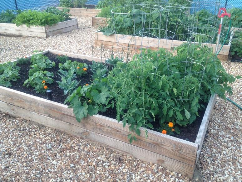 Community Vegetable Garden Installation