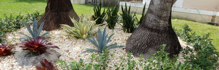 Landscaper in Broward County Florida